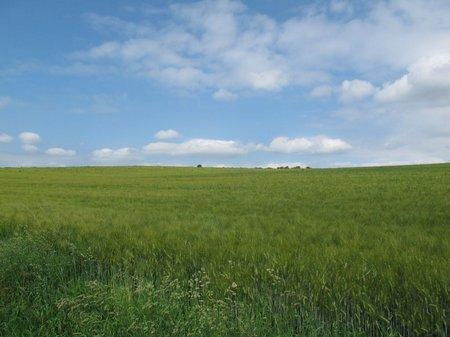 Weite Felder neben der Straße