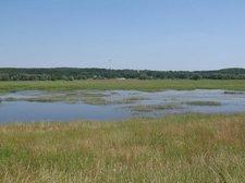 Flutwiesen am Oder-Neiße Radweg